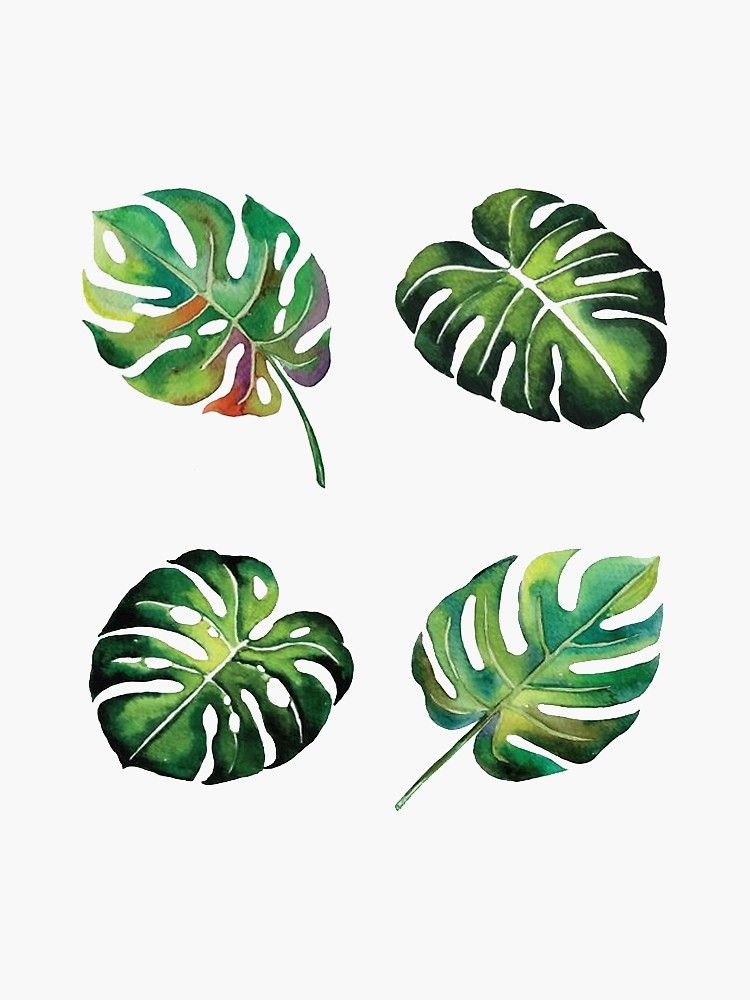 'Palm Leaves' Sticker by CollectionsbyH -   18 tropical plants Watercolor ideas