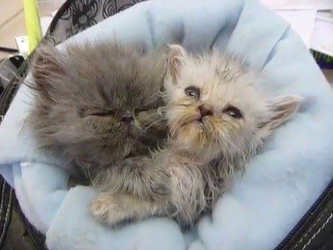 34-Dos gatitos durmiendo en el bolso