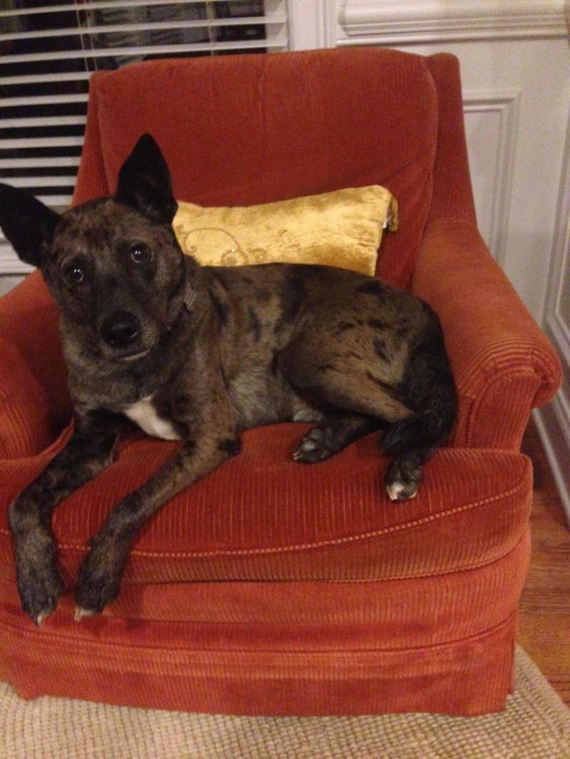 Adopt travis on petfinder dog adoption adoption dog help