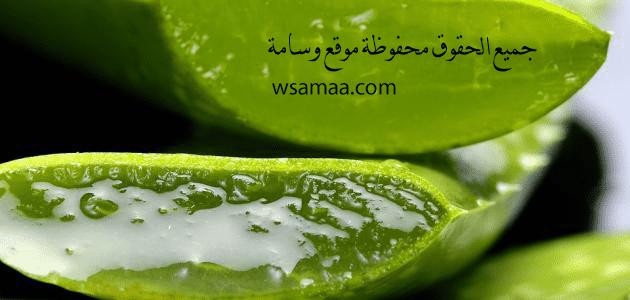 فوائد الألوفيرا للوجه كثيرة جدا حيث ان جل الألوفيرا له فوائد عديدة في علاج البشرة وتخليصها من جميع الامراض العالقة بها Watermelon Interesting Faces Fruit