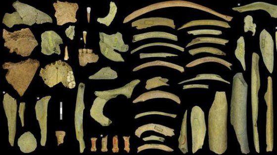 Nella caverna di Goyet i resti consegni di morsi e tagli su ossa di cinque individui, tra cui un bambino