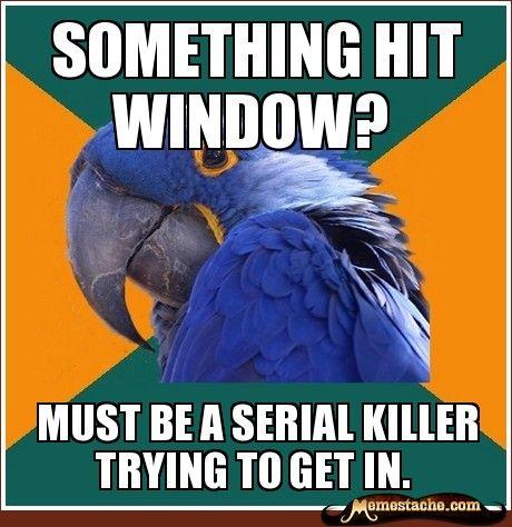 Paranoid Parrot: something hit window?...