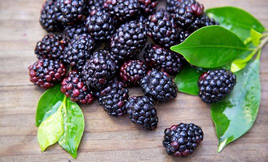 The Age-Old War | Black Raspberries #superfoods | tuja wellness