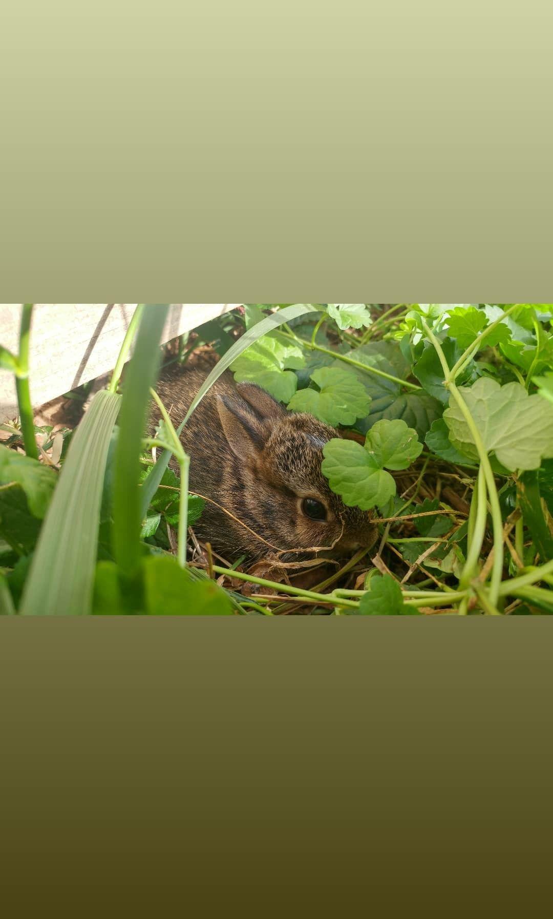 Backyard baby bunny ️   Puppies and kitties, Baby bunnies ...