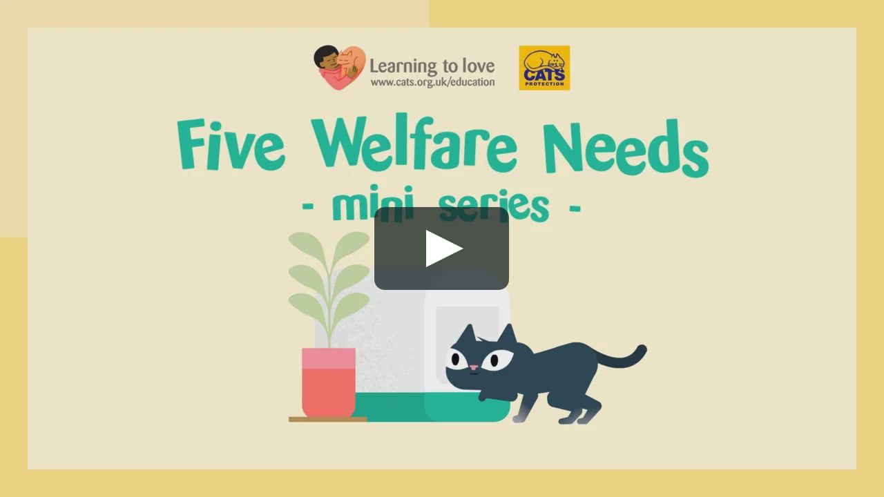 Felix And Rosie Teach You About The Five Welfare Needs In Our Five Episode Mini Series For Cats Protection These Educational Film Uk Education Kitten Care