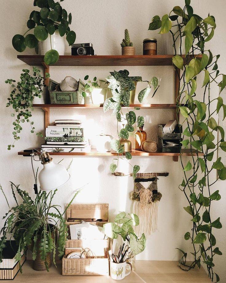GREEN GOALS  Such a unique combination of plants and possessions in this lush green shelfie   friederikchen