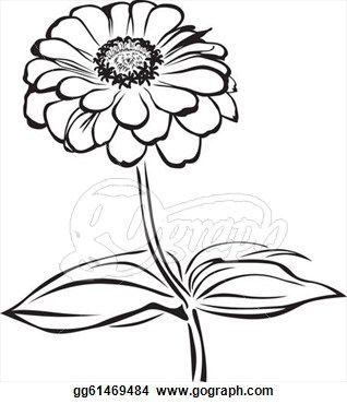 Pix For Gt Zinnia Flower Drawing Zinnia Flowers