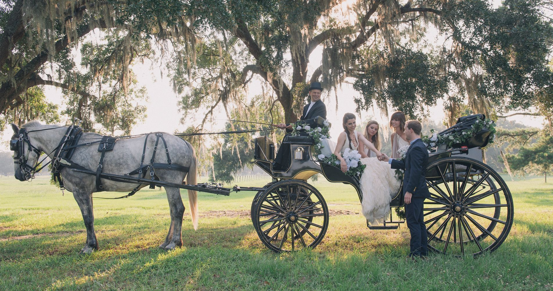 Old South Carriage Company Charleston Carriage Tours Walking