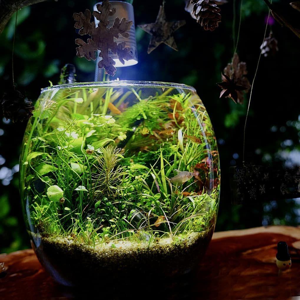 The 2 Month Fishbowl Aquascape Aquarium Aquascape Aquarium Aquascape Fish Tank Design