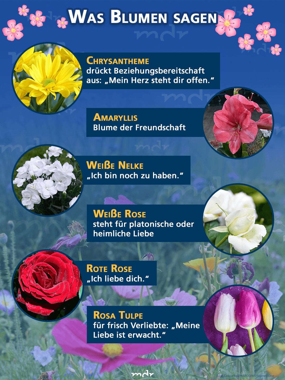 Was Blumen Sagen Sprache Der Blumen Blumen Valentinstag Blumen