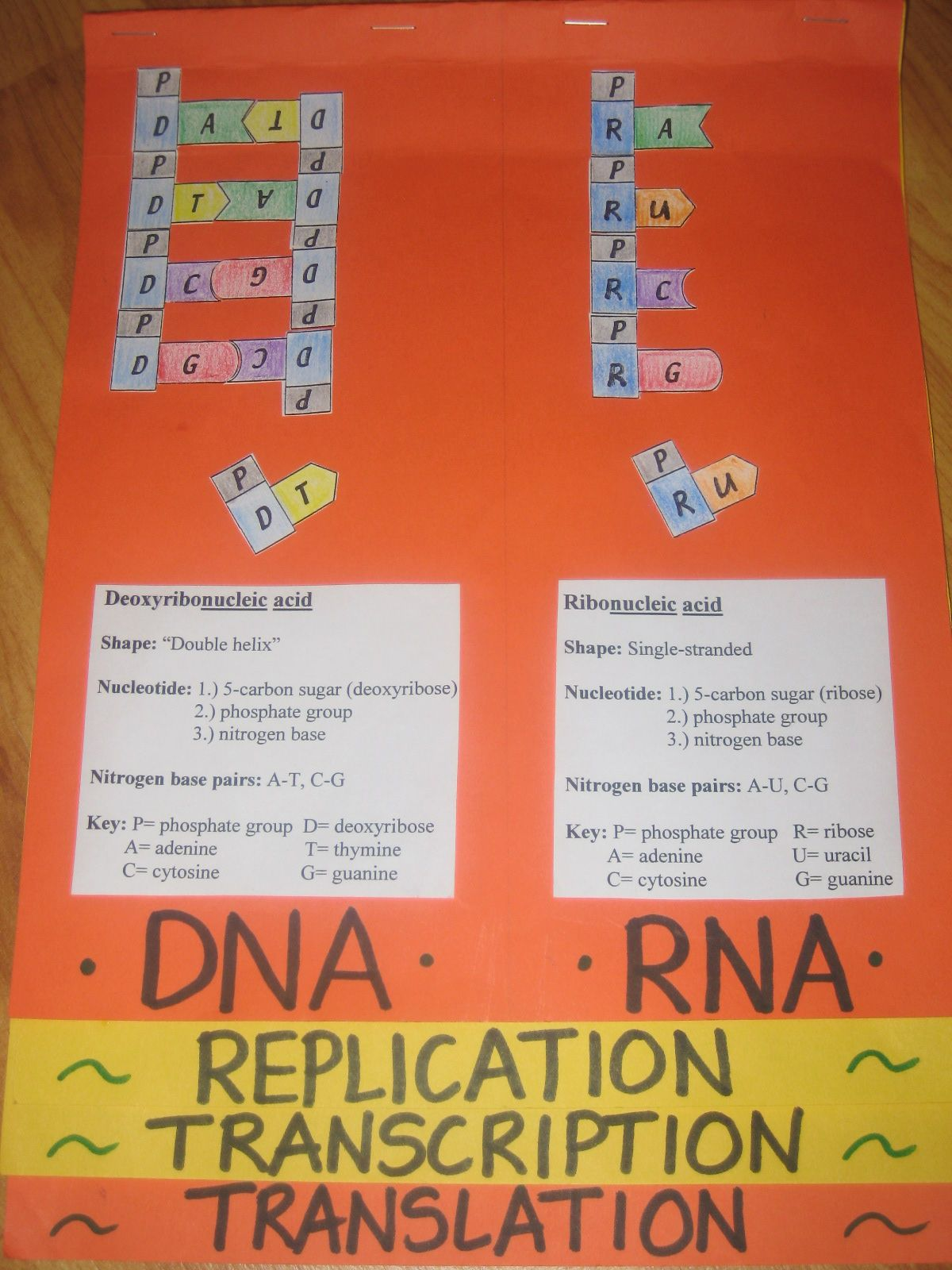 Dna-rna Foldable Math Dna