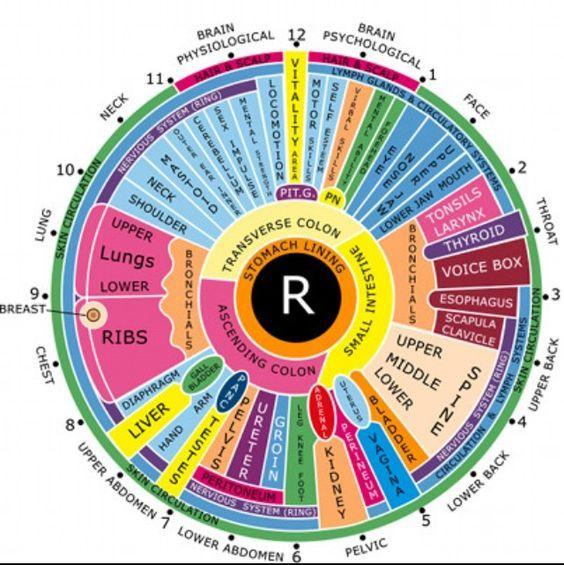 Iridology Chart Musclesreflexology Pinterest Chart