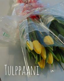 Tulppaanit kestävämmiksi - vinkkejä
