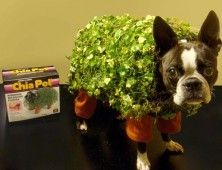 The 47 Absolute Best Animal Costumes Of All Time