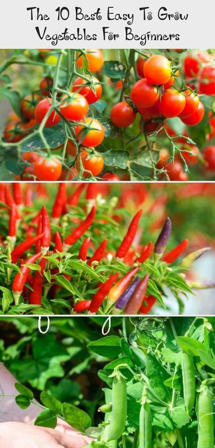 Beginners Container Gardening For Beginners Easy Garden Grow