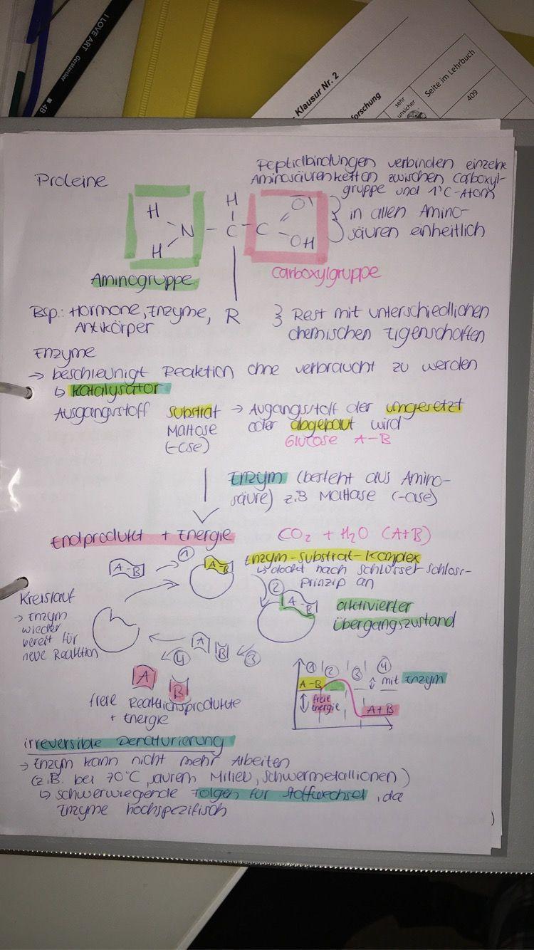 Proteine Enzym Substrat Komplex Ausgangsstoff Endprodukt Aminogruppe Enzym Katalysator Irreverisble Denaturierung Spezifitat 2020