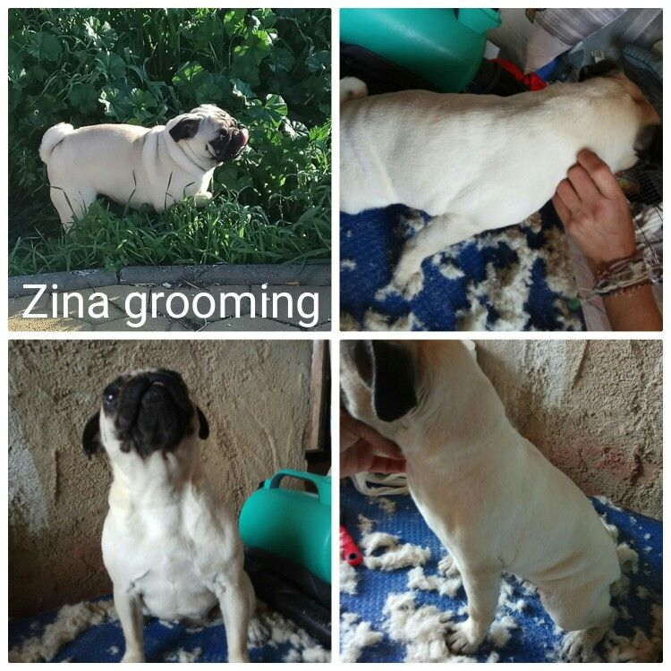 Zina Pag Dogs Animals Heads And Tails