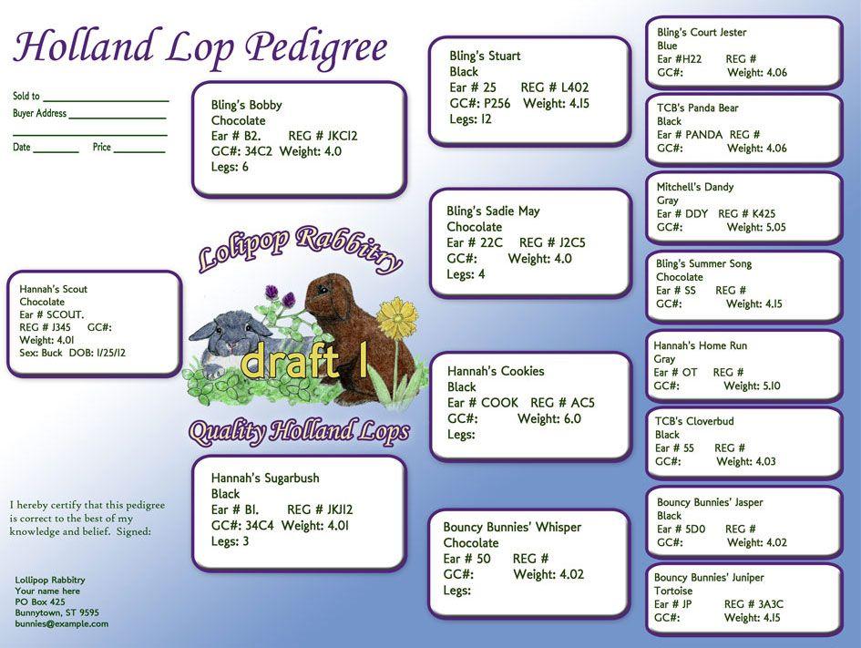 Custom Rabbit Pedigree Designs Holland Lops Pinterest Rabbit - resume rabbit cost