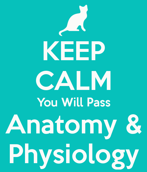 KEEP CALM You Will Pass Anatomy & Physiology - KEEP CALM AND CARRY ...
