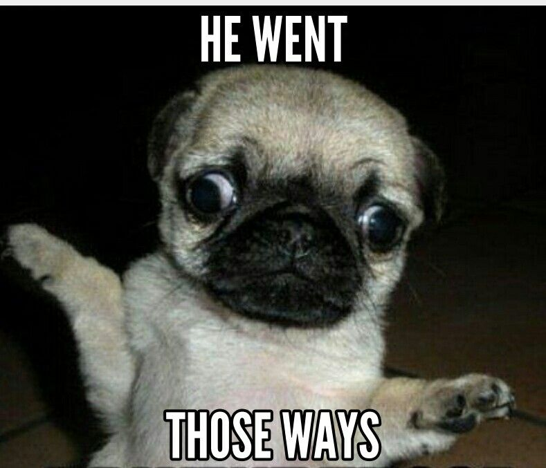 Lol xD | Pugs funny, Funny animals, Funny animal pictures