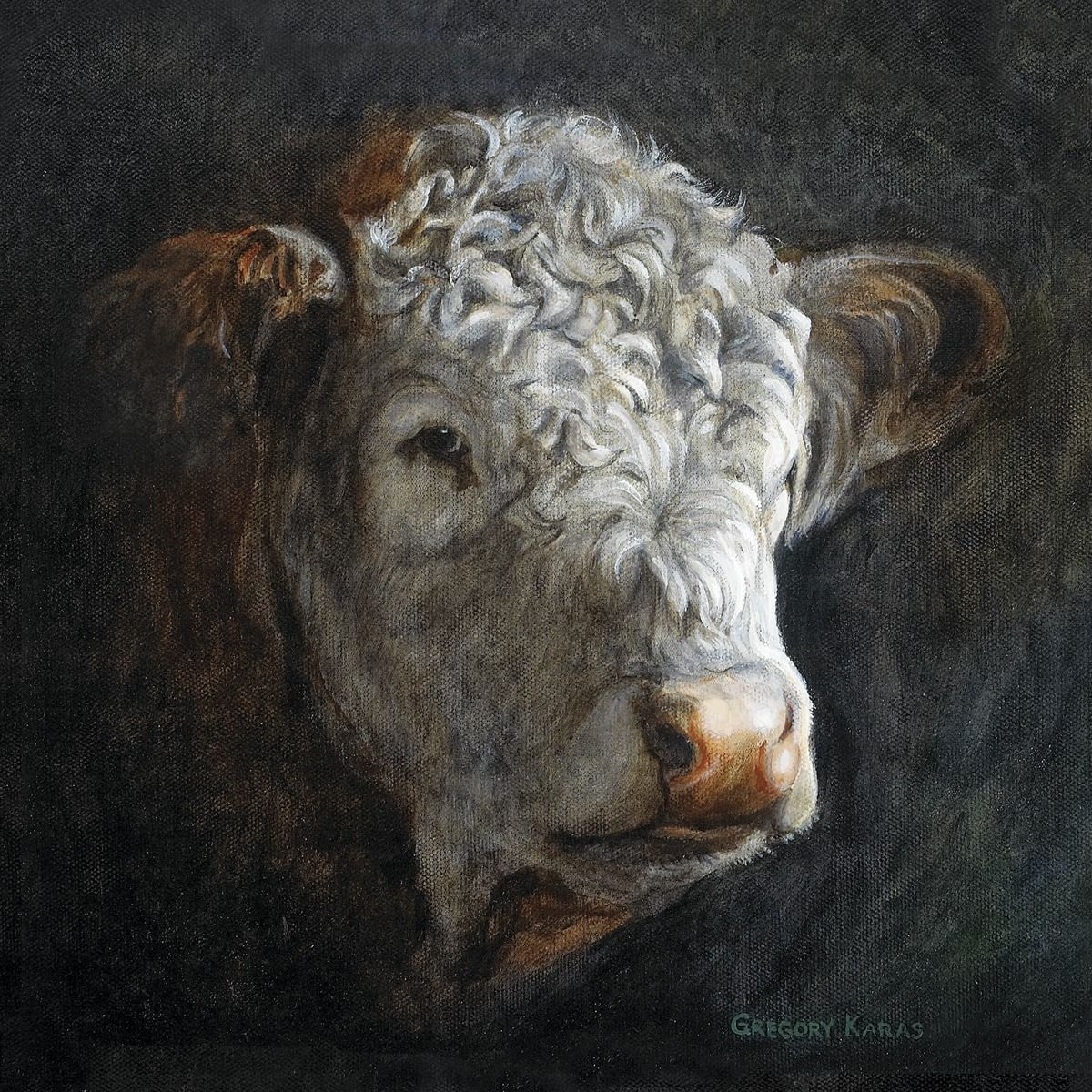 Polled Hereford (With Images)