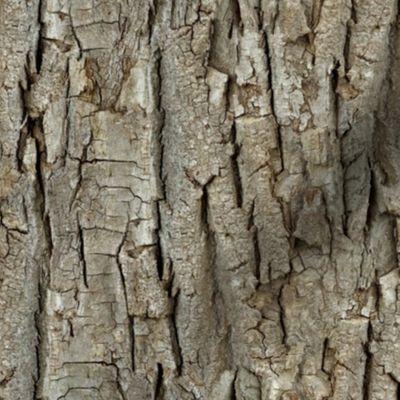 Colorful Fabrics Digitally Printed By Spoonflower Endless Bark Tree Bark Colourful Fabrics Texture