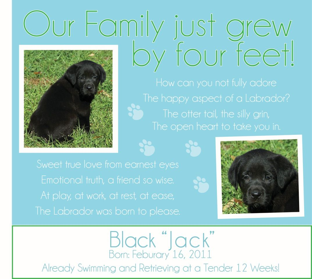 Puppy Adoption Announcement Friends And Family Get Ready To