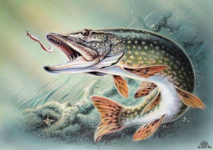 Картинки для декупажа Охота, рыбалка! | Рыбалка, Иллюстрации