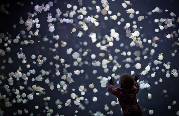 13.) A child watches jellyfish with awe and wonder.