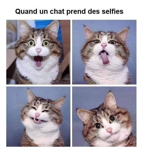 Epingle Par Dame Claudette Sur Chat En 2020 Image Chat Drole Photo Drole Animaux Photo Chat Drole