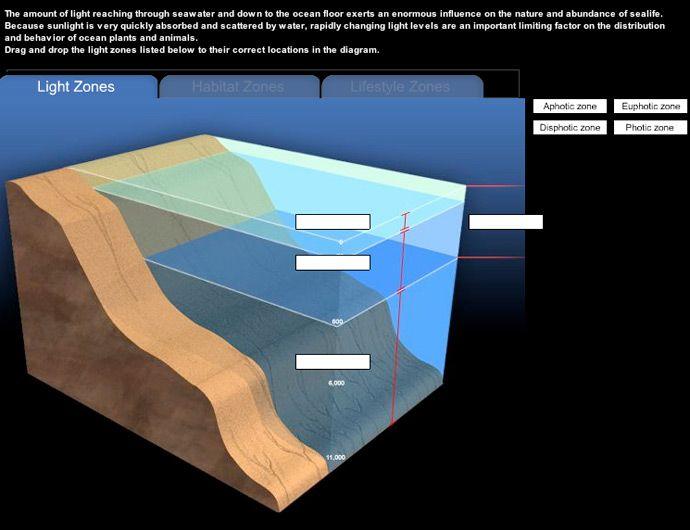 Ocean Floor Diagram With Animals Block And Schematic Diagrams
