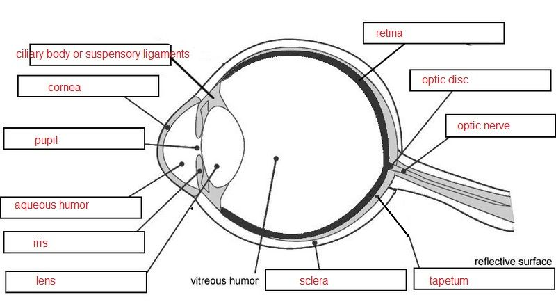 eye diagram quizzes wiring diagram user