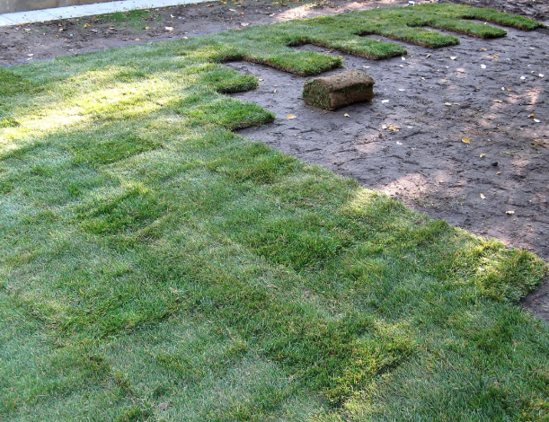 Florida S Sandy Soil Can Make It Very Difficult To Grow Grass If You Need More Grass In Your Yard Sod In In 2020 Sandy Soil Commercial Landscaping Lawn And Landscape