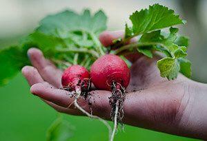Budding Gardeners educational holidays