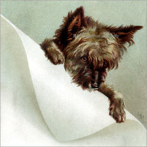 Cairn Terrier Card Toto Dog Greeting Card Repro By Katydidscards Cairn Terrier Terrier Terrier Dogs