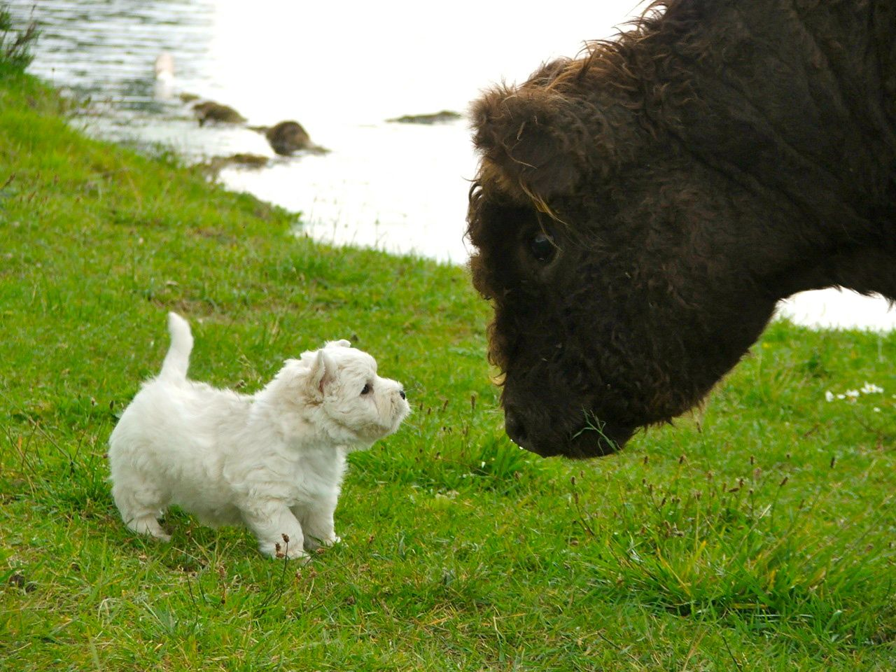 Bobby meets bison 5