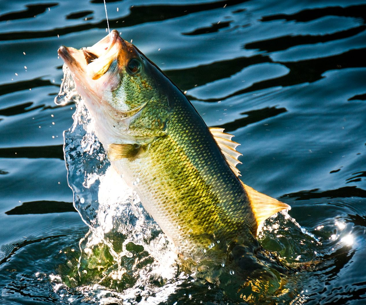 How To Setup And Use A Spinning Rod And Reel Fish Wallpaper Fish Bass Fishing