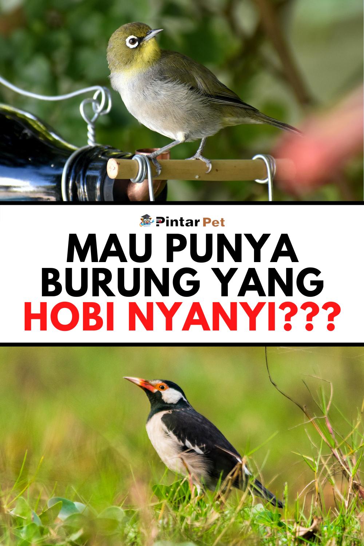 Pin Di Tips Burung