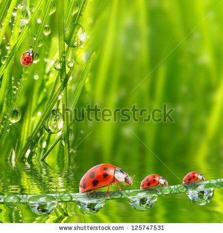Fresh morning dew on a spring grass and little ladybug, natural background - close up with shallow DOF. by Kletr, via Shutterstock