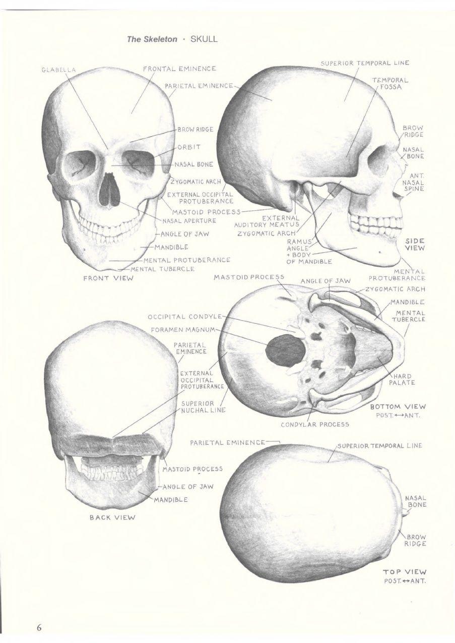 Eliot Goldfinger Human Anatomy For Artists Anatomy Pinterest