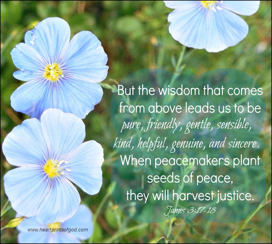 Image result for James 3:18