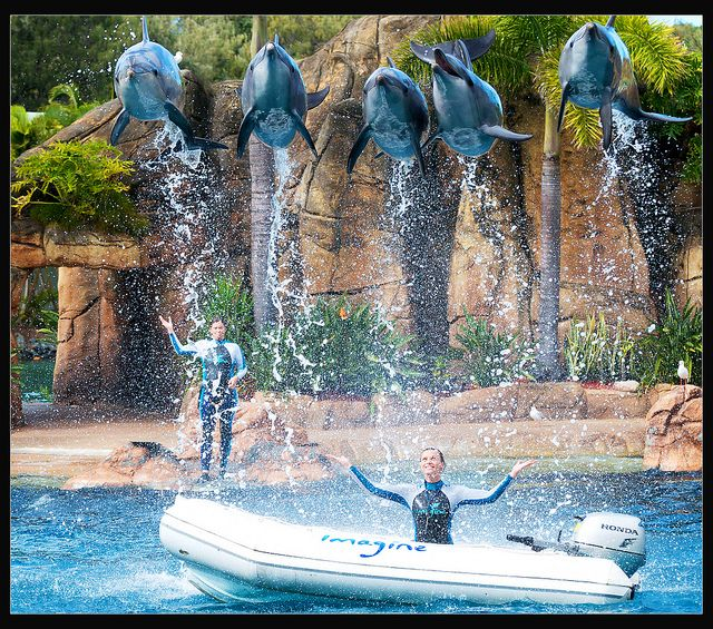 The Day It Rained Dolphins Gold Coast Australia Sea World Gold Coast Queensland
