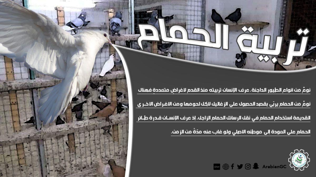 تربية الحمام نوع من أنواع الطيور الداجنة عرف الإنسان تربيته منذ القدم لأغراض متعددة فهناك نوع من الحمام يرب ى بقصد ا Diy Home Crafts Home Crafts Home Diy