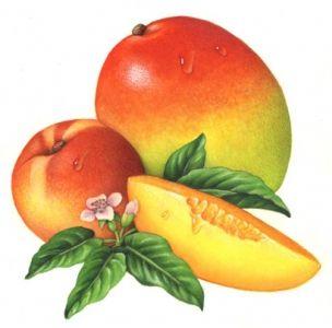 Resultado De Imagen Para Dibujos De Arboles De Mango Ilustracion De Fruta Laminas De Frutas Mango Fruta