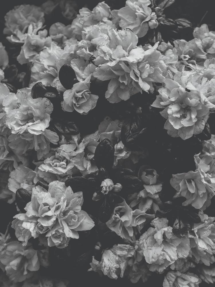 Flower Market / Black & White — STUDIO JASMINE Flower