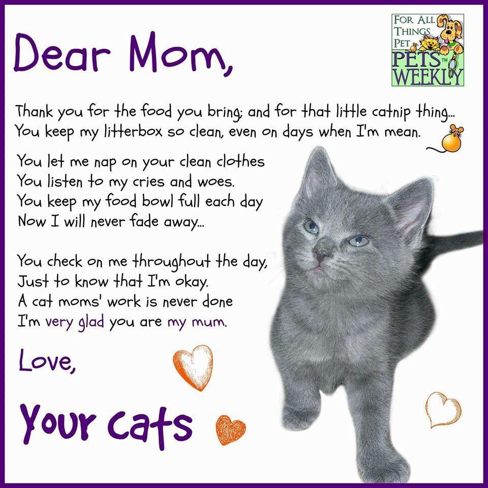 Dear Mom Cat Poems Dear Mom Cat Mom