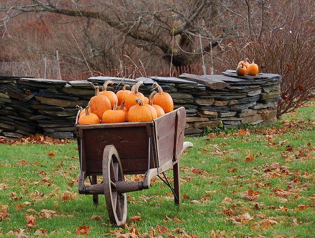 pumpkins,gorgeous old wheelbarrow!!! | Fall pumpkins, Pumpkin, Fall harvest