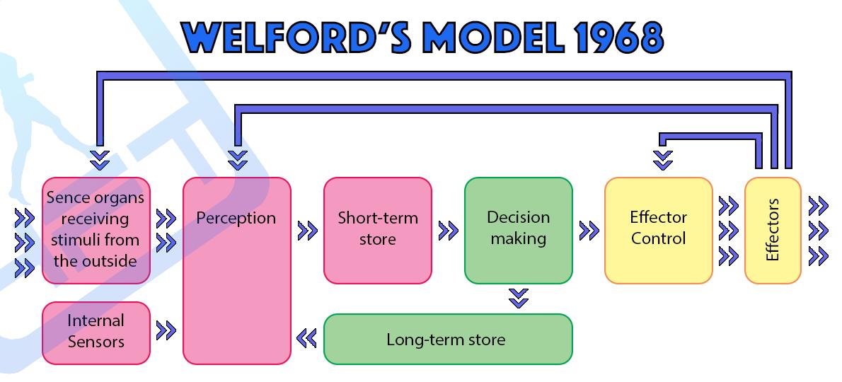 Sports Psychology Welfords Model 1968 Sports psychology