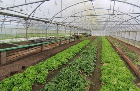 Permaculture Magazine | practical solutions for self ...
