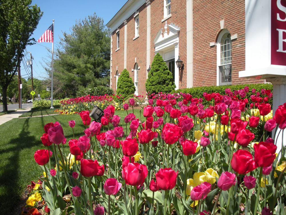 Pink and yellow tulip garden design | Garden Design | Pinterest ...